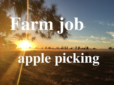 Farm Job In Australia/ Apple Farm