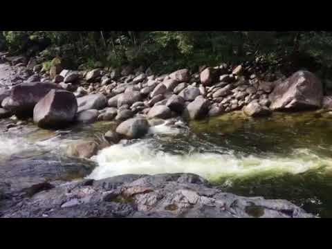 Barron Creek im Daintree National Park