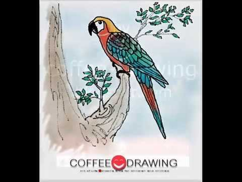 how to draw สอนเด็กวาดรูปการ์ตูน นกแก้วมาคอว์ [MACAW BIRD] [by coffee-drawing]