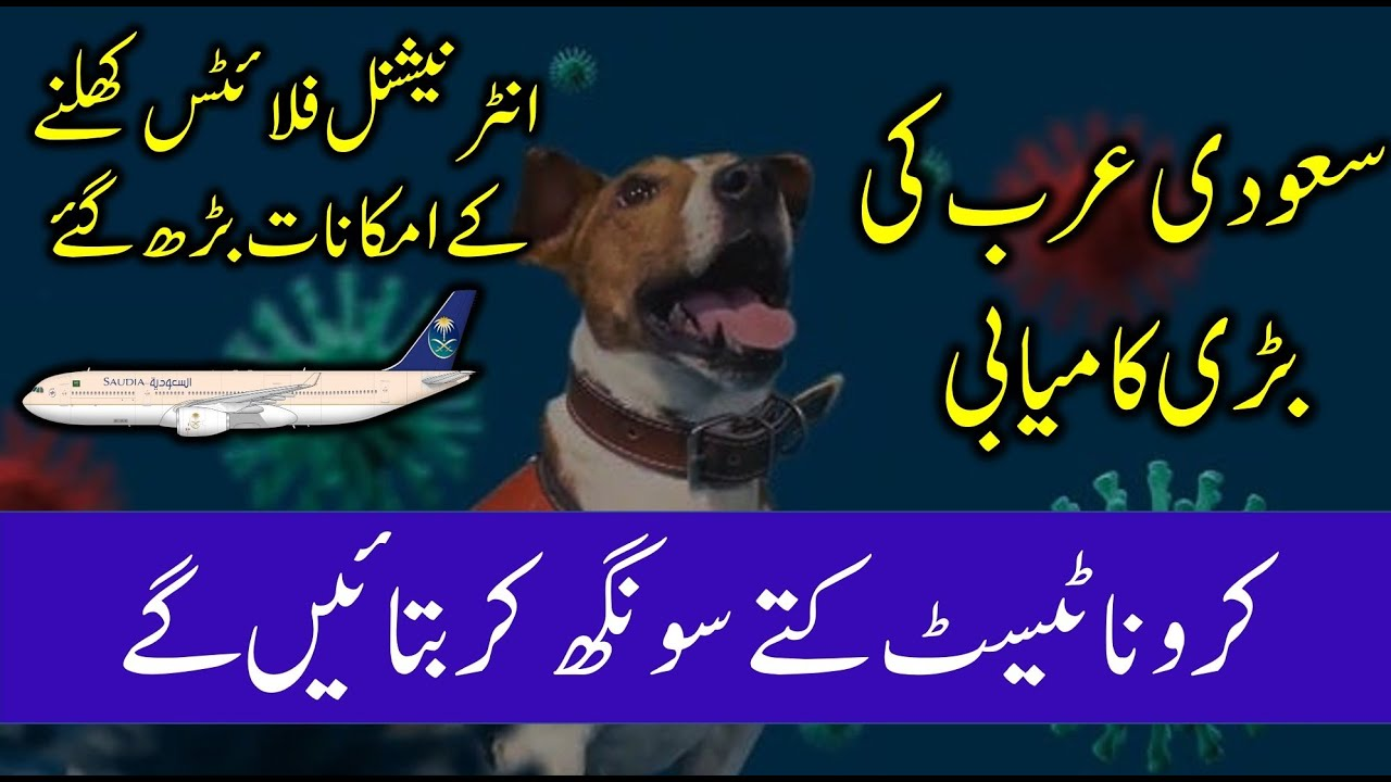 Covid 19 Test by Dogs   International Flights for Saudi Arabia   Saudi Info