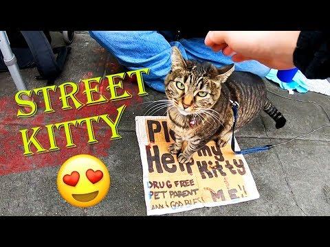 Seattle Homeless Street Kitty Cat Named Blue - TRAVEL VLOG