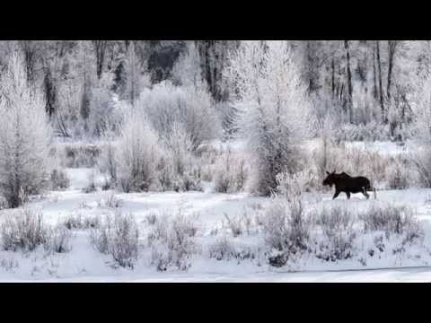 Yellowstone National Park Winter Wonderland