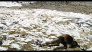 Altiplano Trailer