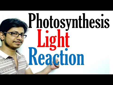 Light reaction of Photosynthesis | Photosynthesis lecture 1