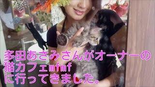 多田あさみさんがオーナーの猫カフェmfmfに行ってきた。 多田あさみ 検索動画 7