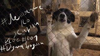 Летящие по жизни. VLOG#001 - Подарки приюту для собак на новый год