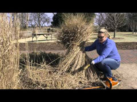 Cutting Back Replanting Dividing Ornamental Grasses Youtube