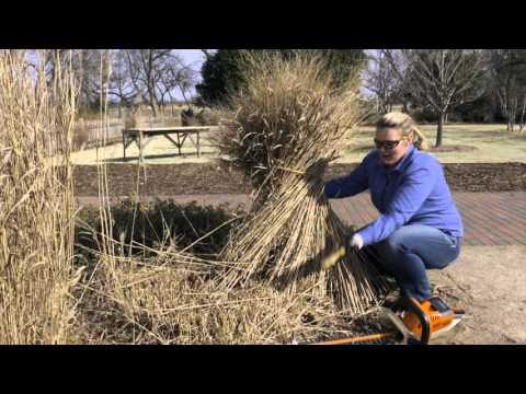 Cutting Back Replanting Dividing Ornamental Grasses YouTube
