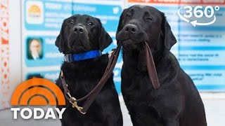 America's VetDogs Trainee Charlie Reunites With His Family In Studio 1A   TODAY
