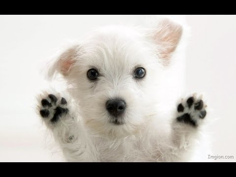 Funny Talking Dog Video Compilation [!NEW 2016!] – Best Talking Dogs Of 2016
