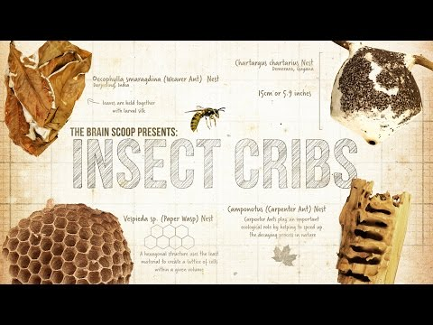 Insect Cribs