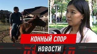«Лошадь – это транспорт, и надо соблюдать ПДД» – пострадавшую в конном клубе сделали виноватой