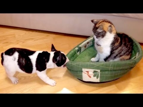 Wanna LAUGH? Funny DOGS will take care of it! - The BEST VIDEO of the YEAR