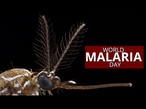 World Malaria Day 2019: All you need to know about life-threatening disease
