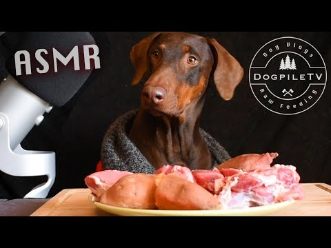 Epic ASMR Doberman Reviewing Raw Meats & Veggies! w/ Subtitles