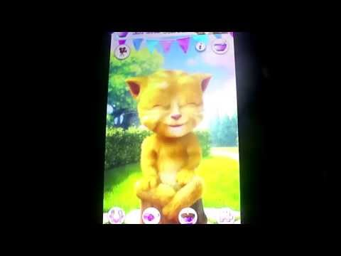 ginger the farting cat funnycat tv