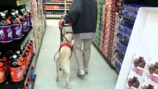 Assistance Work At Man's Best Friend Dog Training