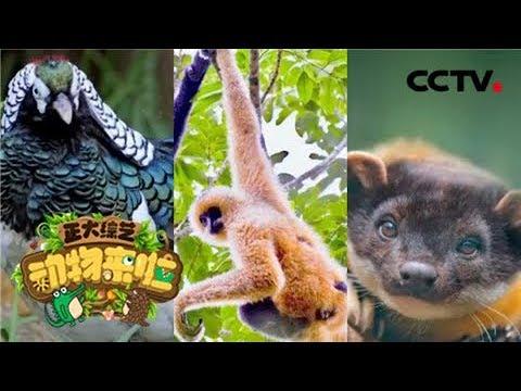 猜图几种动物_[正大综艺·动物来啦]动物我知道 看图猜动物:中国特有珍贵稀有 ...