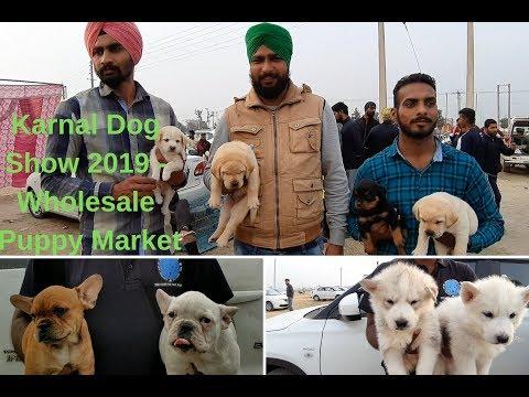 Karnal Dog Show 2019 - Wholesale Puppy Market
