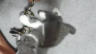 아기고양이 뿌이 깨물기 장난감♥