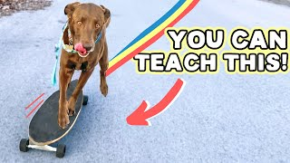 EASY DOG SKATEBOARDING TIPS  Literally anyone can train this way!!!