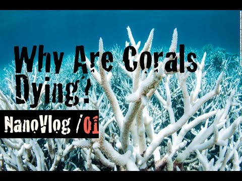NanoVlog 01 - Why Are Coral Reefs Dying?