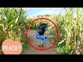 Struggles That Are Way Too Real For Clumsy People | Funny (Outdoor) Fails