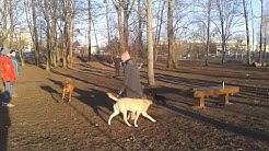 Heute im Hundepark 1
