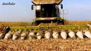 750ha kukurydzy na ziarno w AGRO-FARM Zaczopki