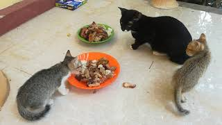 Cat - Cats - Funny Cats - Baby Cats - Cute Cats - Funny Cat Eating - Cute Cats Videos 2020