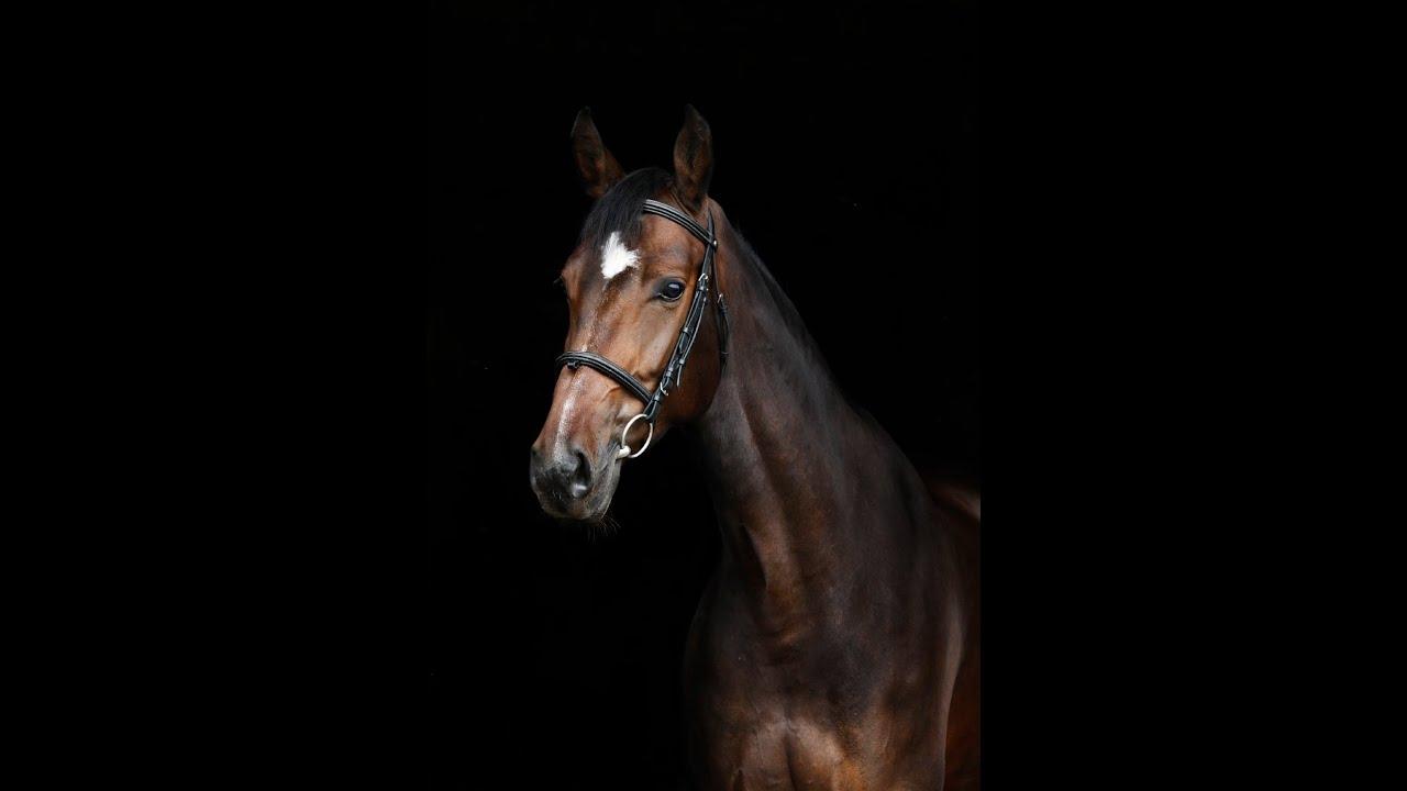 Florida Horse Property