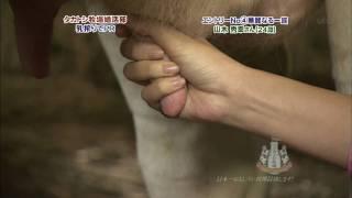 山本梓が握った肉棒から白い液が・・・ 山本梓 動画 13