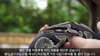 주인이-알아챘을-때-반려묘는-사라진-상태였다-그리고-다음-날-아침-거대한-야생-비단뱀을-발견했다-ranking-world