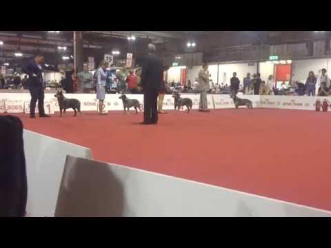 World Dog Show 2015 ACD Best Of Breed