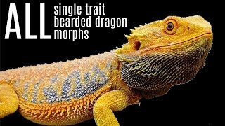 ALL Bearded Dragon Morphs | All Single-trait Bearded Dragon Morphs