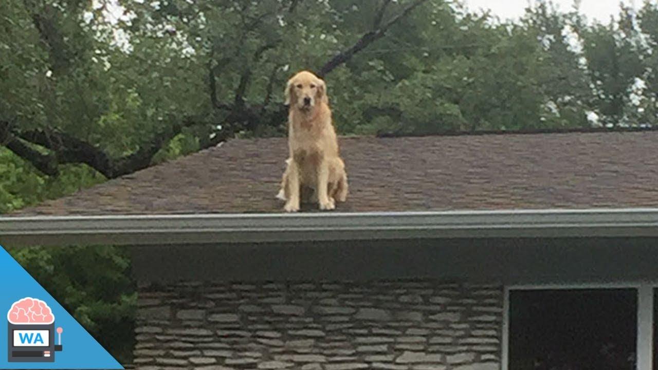 Dieser Hund Auf Dem Dach Wurde Zur Internetsensation Youtube