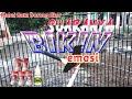 Langsung Bongkar Isian Suara Pancingan Agar Murai Batu Bongkar Isian  Mp3 - Mp4 Download