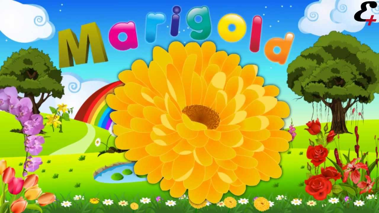 "flower names"" in animation video for kids and children, Beautiful flower"