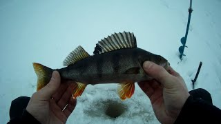 Зимняя рыбалка в феврале 2020. Ловля окуня на мормышку