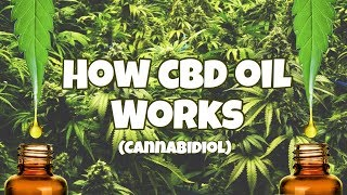 CBD Oil (Cannabidiol)- How It's Different from THC & Benefits