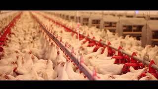 cowspiracy deutsch 4 min