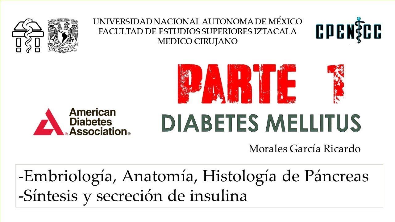 histología de imágenes de páncreas diabetes