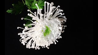 ABC TV | How To Make Spider Chrysanthemum Flower From Crepe Paper #2 - Craft Tutorial