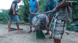 Bắt lợn cụ để lên nhà mới | Hoa Ban Tây Bắc