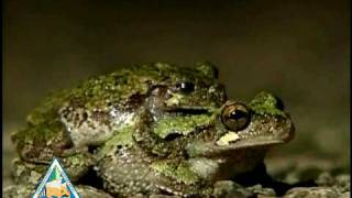 Frogs - Leap Year Music Video
