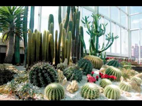 Cactus garden design ideas pictures YouTube