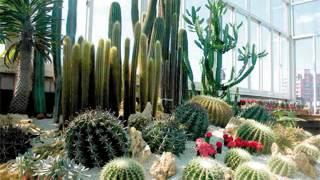 Cactus Garden Design Ideas Pictures