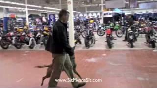 Atlanta Dog Training - Dog Training Without A Training Collar