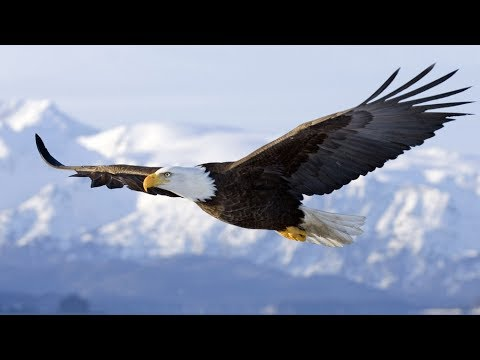 Spirit Animal ~ Eagle ~Native American Music -Niall