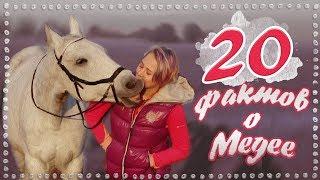 20 фактов о моей лошади